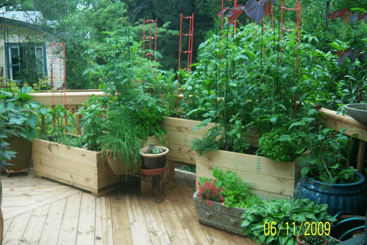 Vegetable Gardens For City Dwellers Rivas Design Landscaping LLC